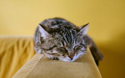 Traslocare con il Proprio Animale Domestico: a cosa fare Attenzione