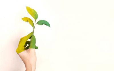 4 piante facili per arredare la tua casa